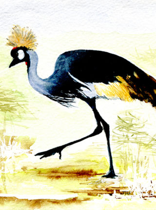 1011 JJ Gray Crowned Crane - Africa web